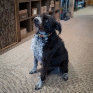 Meet Skye, our Head of Security. We love visitors but you should know that Skye will be checking you out!