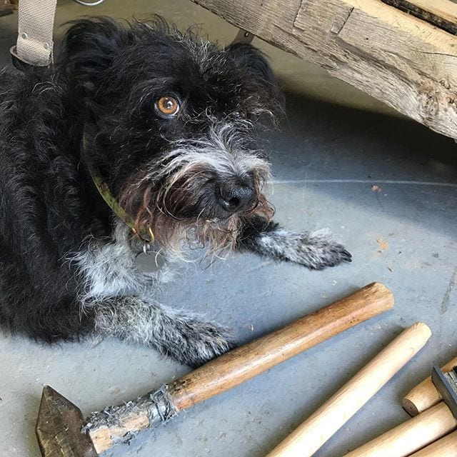 WANTED: Entry Level Timber Framer. Must have a great attitude, be willing to learn, and possess opposable thumbs. Sadly, Skye-Dog here is 2 for 3 … how about You? PM us!