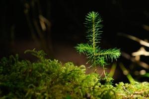 natures carbon sponge